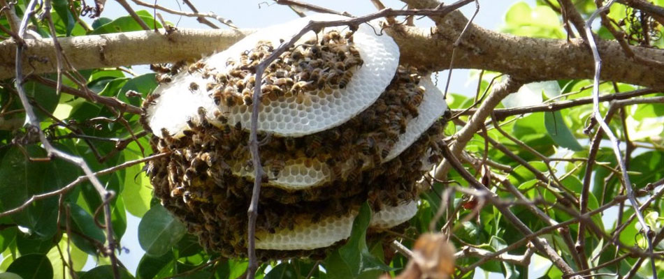honey bees on commercial property