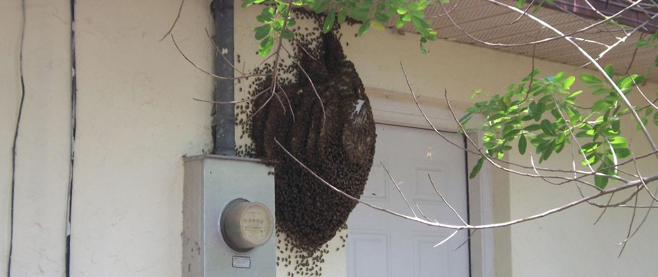 tips on bee proofing your home