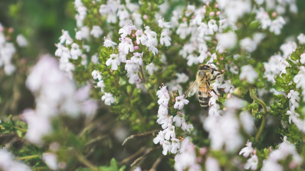 live honey bee removal services
