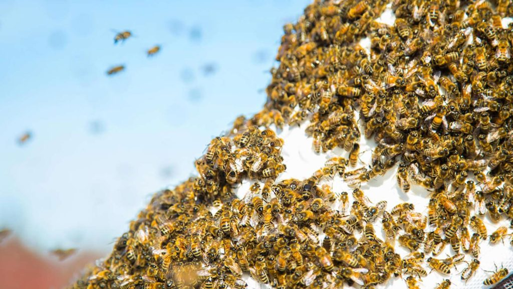 Who to call for bee hive removal